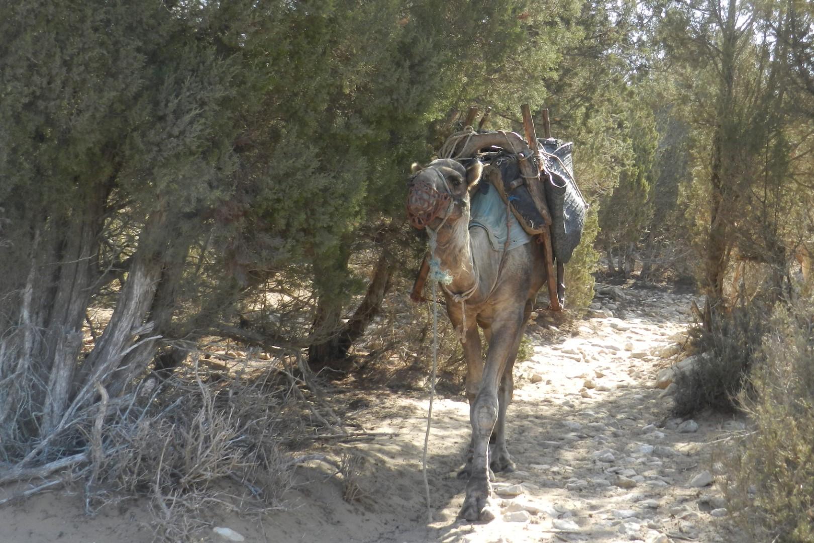 jeûne Essaouira oasis